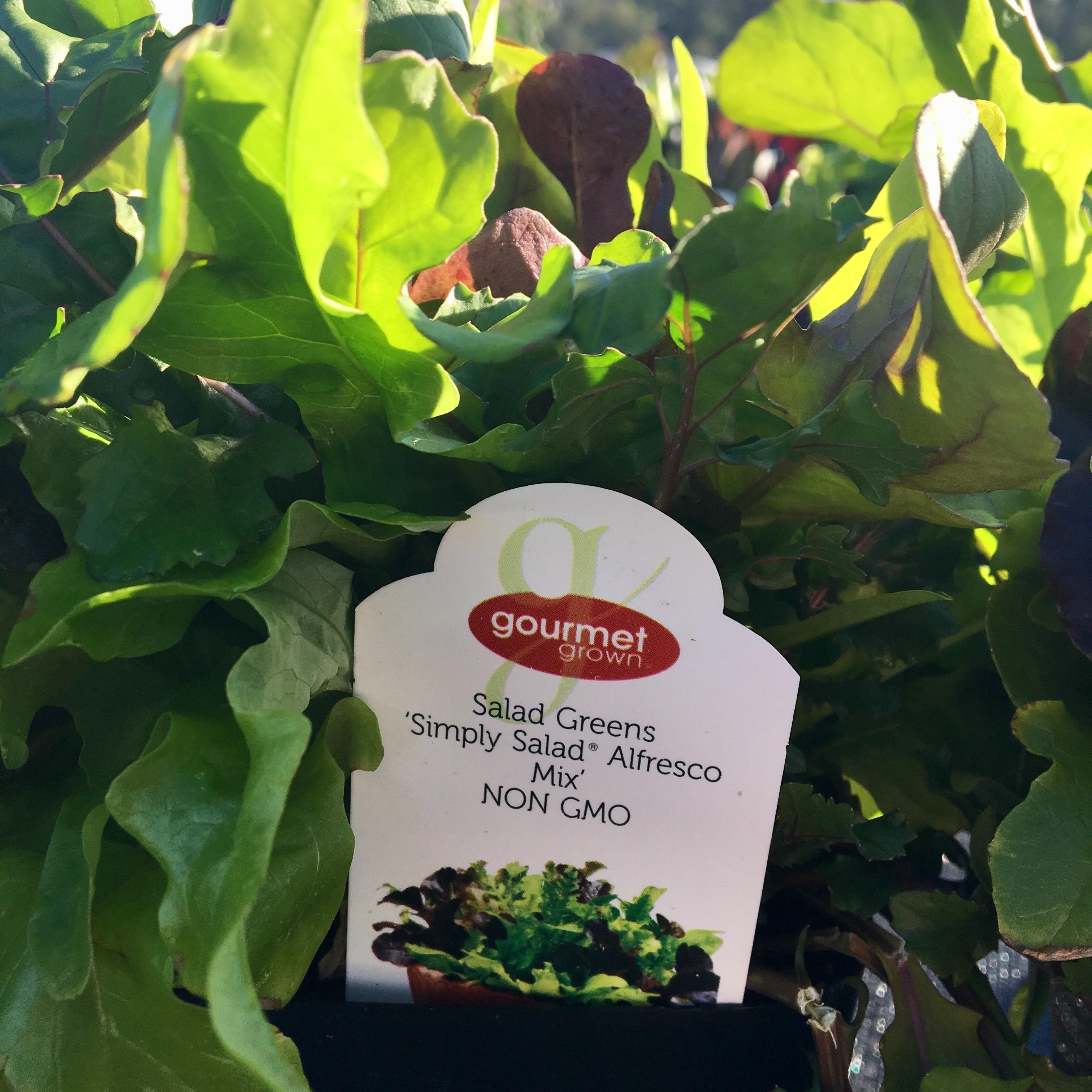 Salad Greens Simply Salad Alfresco Mix image