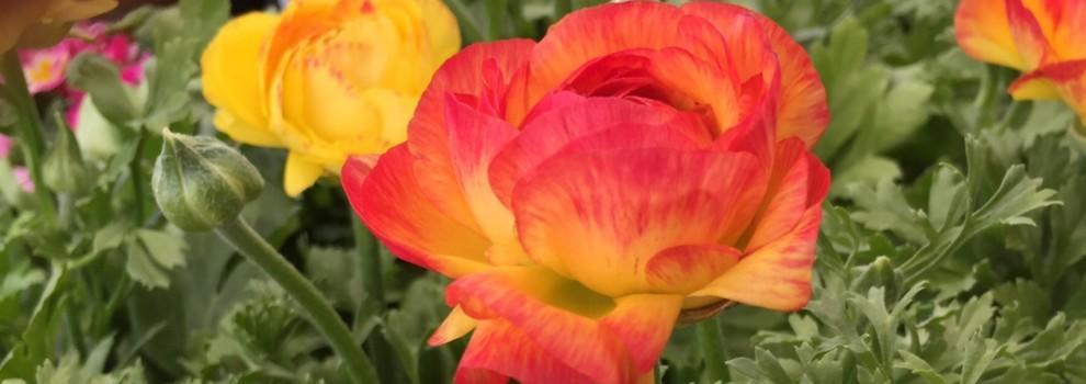 Homepage | Premier Color Nursery
